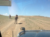 "Often we saw more animals crossing the ""roads"" than humans or cars. Mongolian roads are like animal highways!"