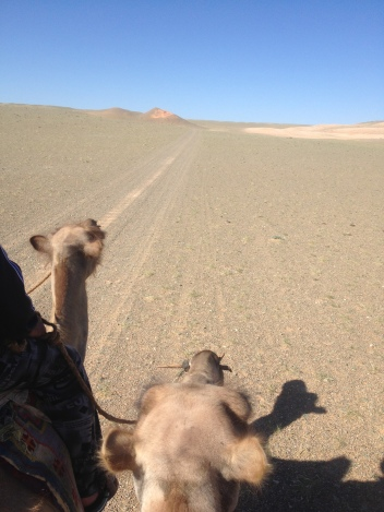 Camels are a legit form of transport in Mongolia, down in the Gobi.